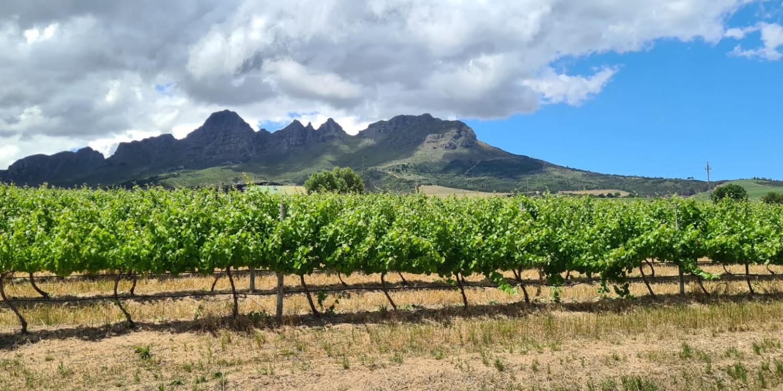header Longridge Wine Estate